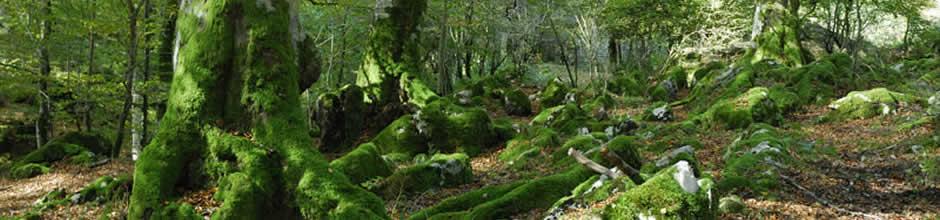 Selva Irati - Irati - Hoteles Selva de Irati - Hotel Rural Besaro - Ochagavia - Navarra.